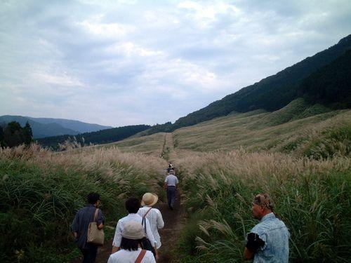 仙石高原のススキ